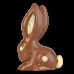Long ear rabbit
