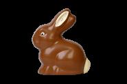 Jumbo sitting rabbit