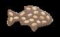 "Konturtafel ""Fisch"" (verfügbar ab September 2019)"